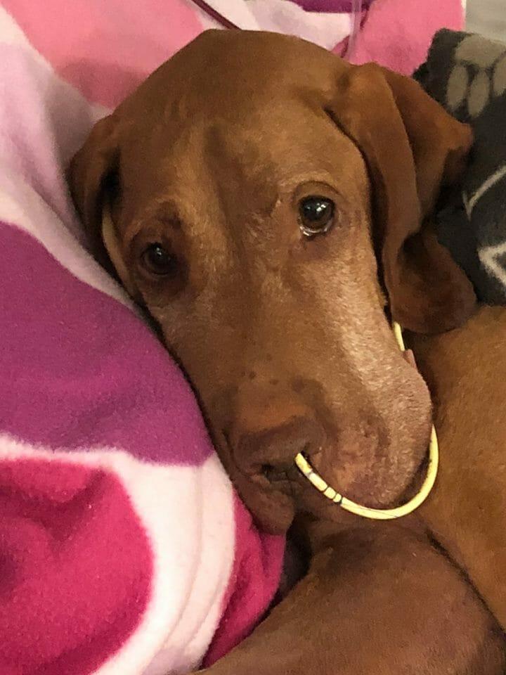 Pies umierał w męczarniach po zjedzeniu produktu, który wiele z nas ma w domu