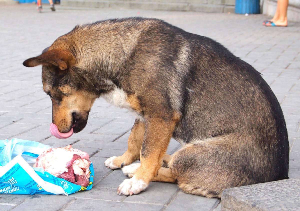 10 popularnych mitów na temat psów, w które jak najszybciej musisz przestać wierzyć