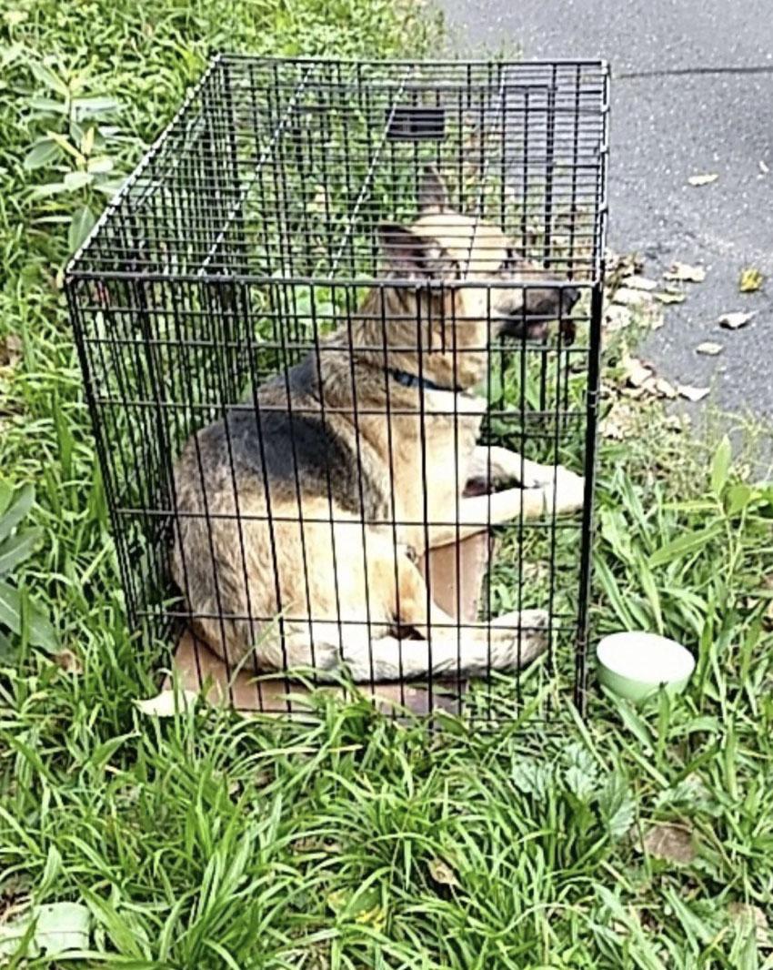Policjanci znaleźli porzuconego psa w ciasnej klatce. Opinia weterynarza złamał ich serca