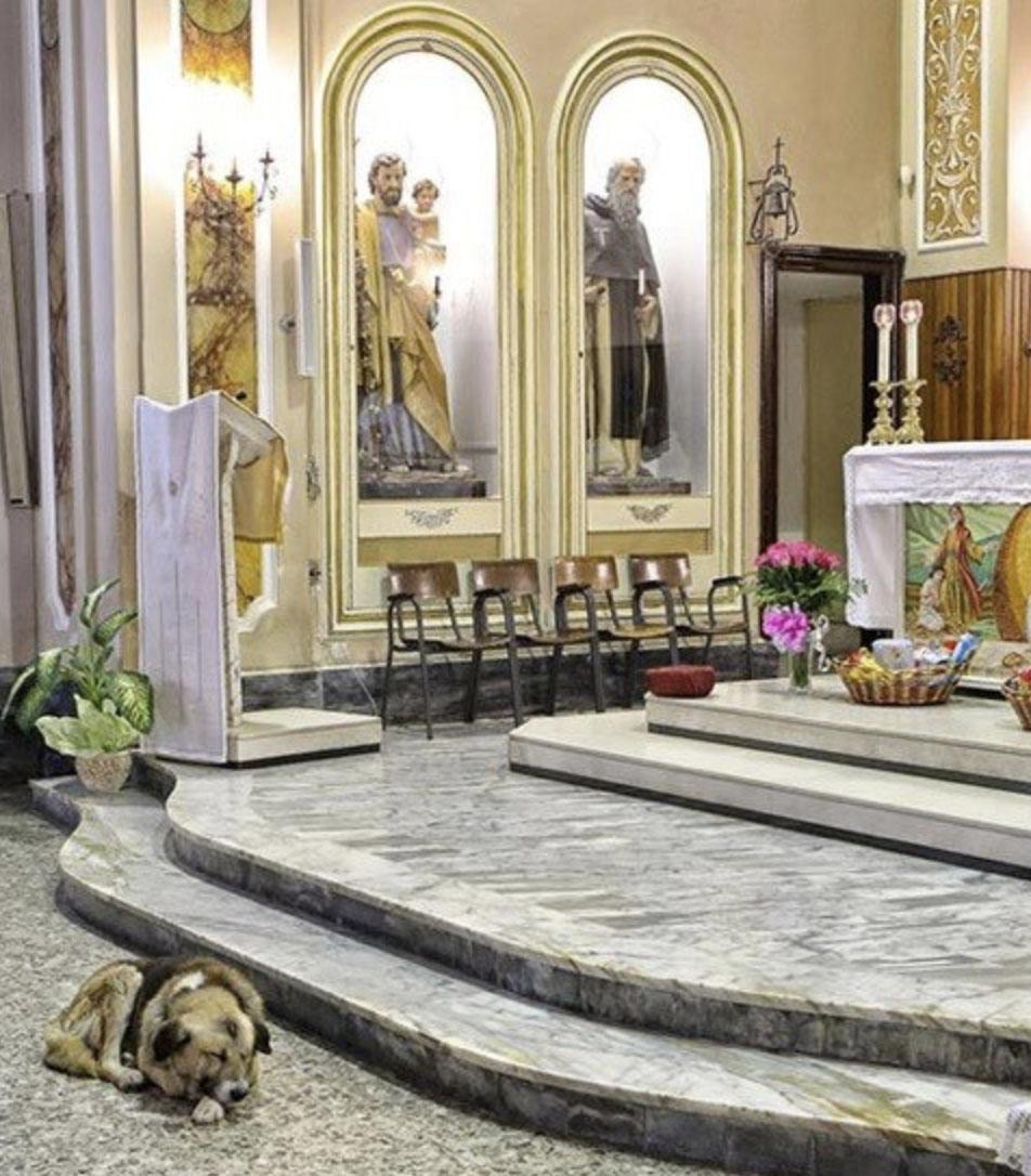 7-letni pies przychodził do kościoła każdego dnia. Powód łamie serce