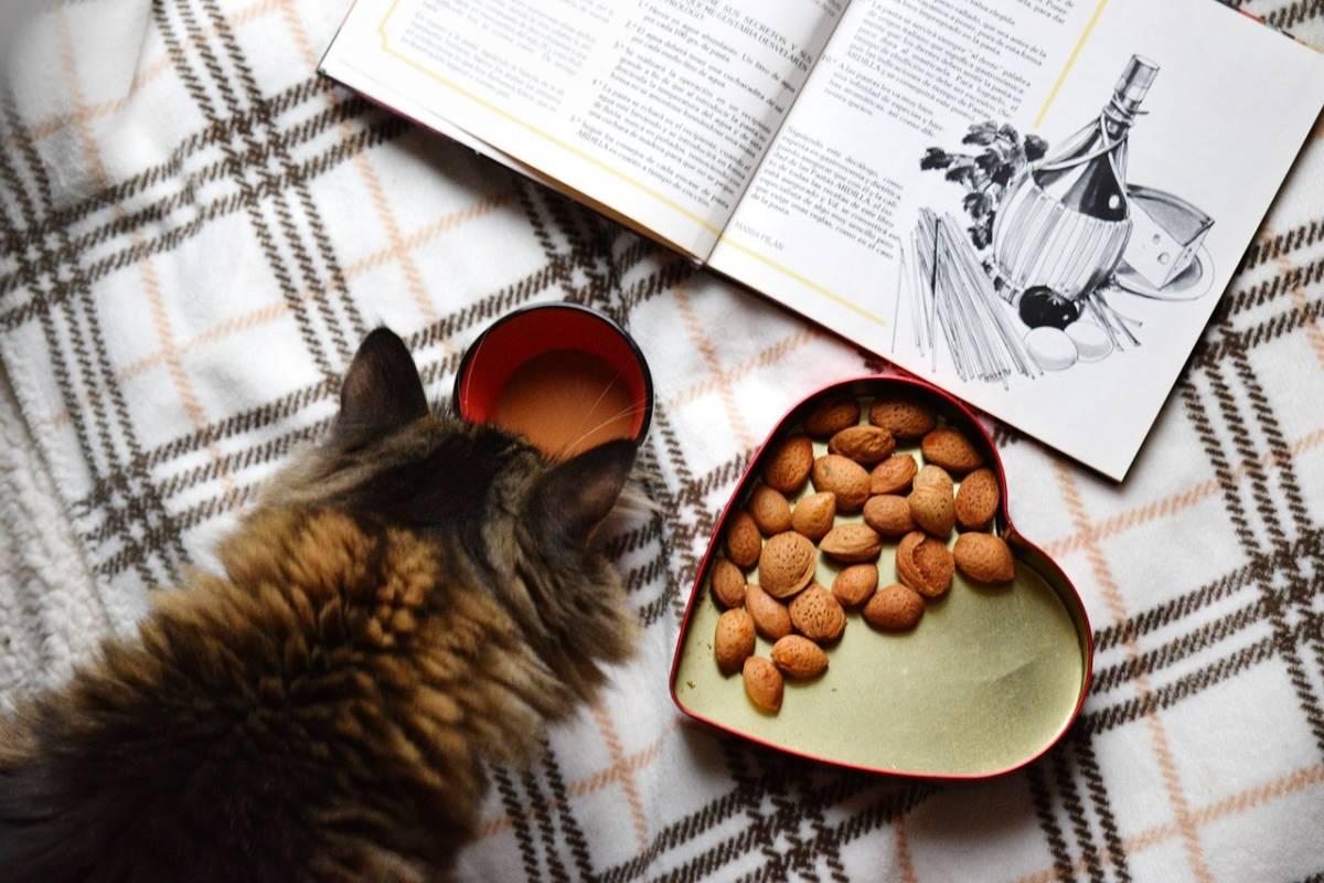 10 produktów, których pod żadnym pozorem nie powinieneś dawać swojemu kotu!