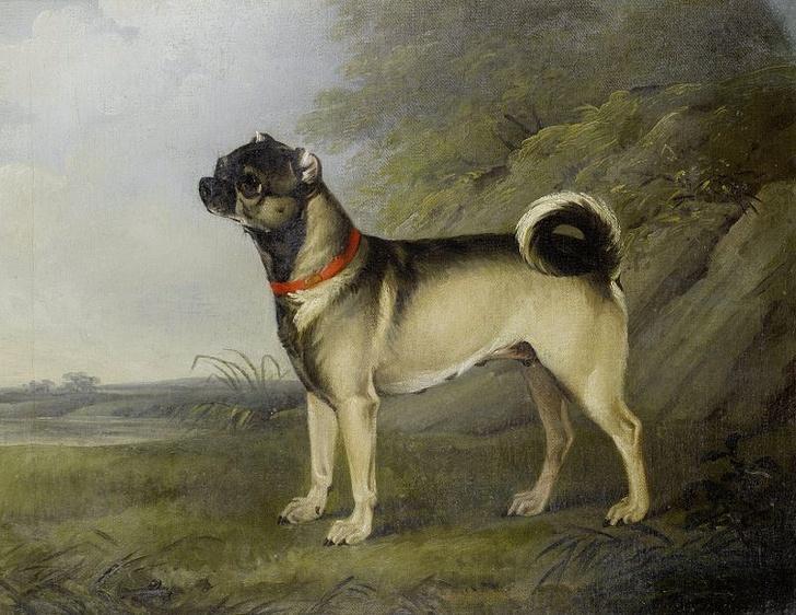 Oto jak popularne rasy psów zmieniły się na przestrzeni lat