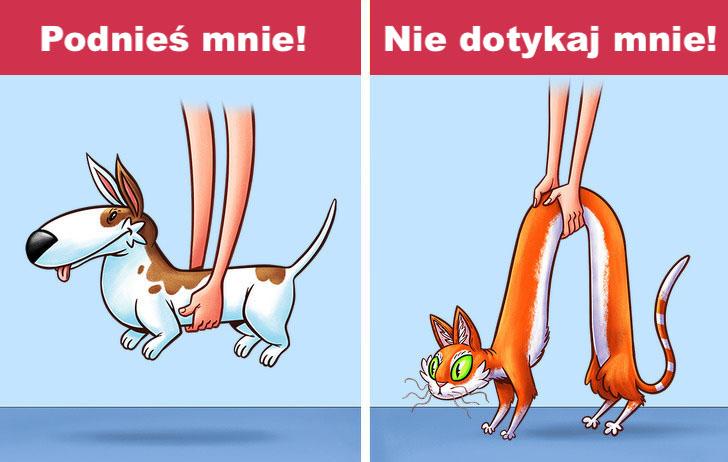 9 drastycznych różnic między psami a kotami