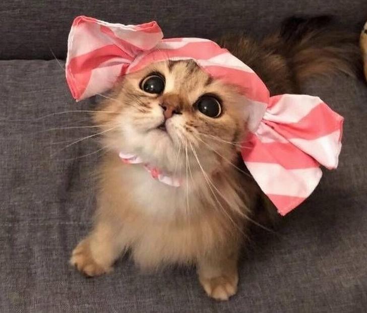 17 wyjątkowych rzeczy, które potrafią robić tylko koty