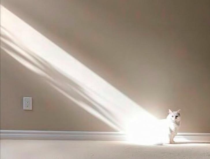 17 wyjątkowych rzeczy, które potrafią robić koty. Inne zwierzęta mogą tylko zazdrościć