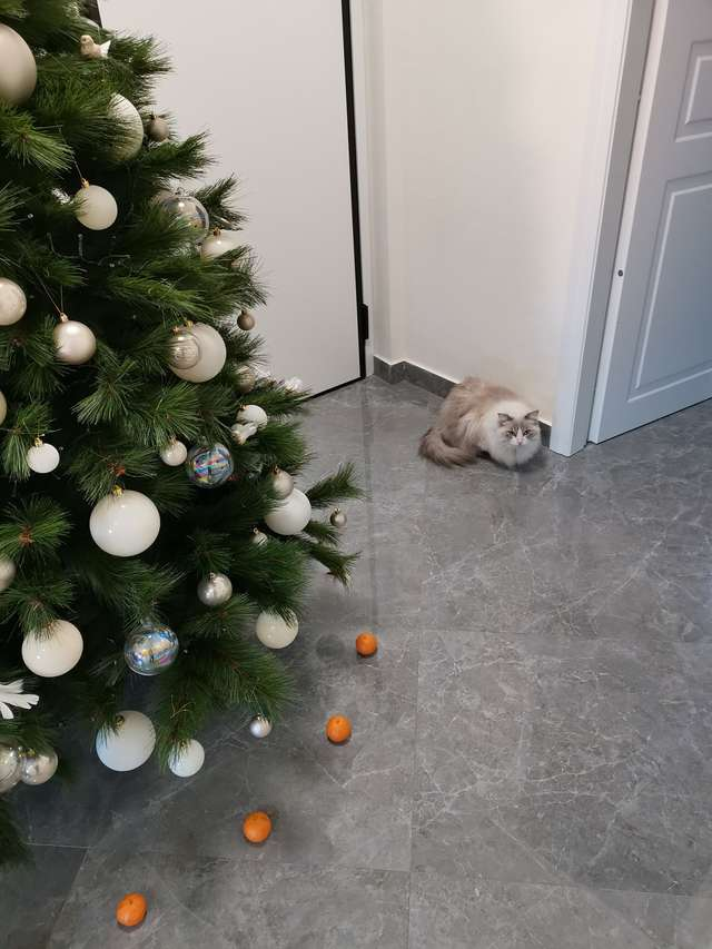 Wymyśliła sposób, by kot nie niszczył choinki. Teraz boi się do niej nawet podejść!