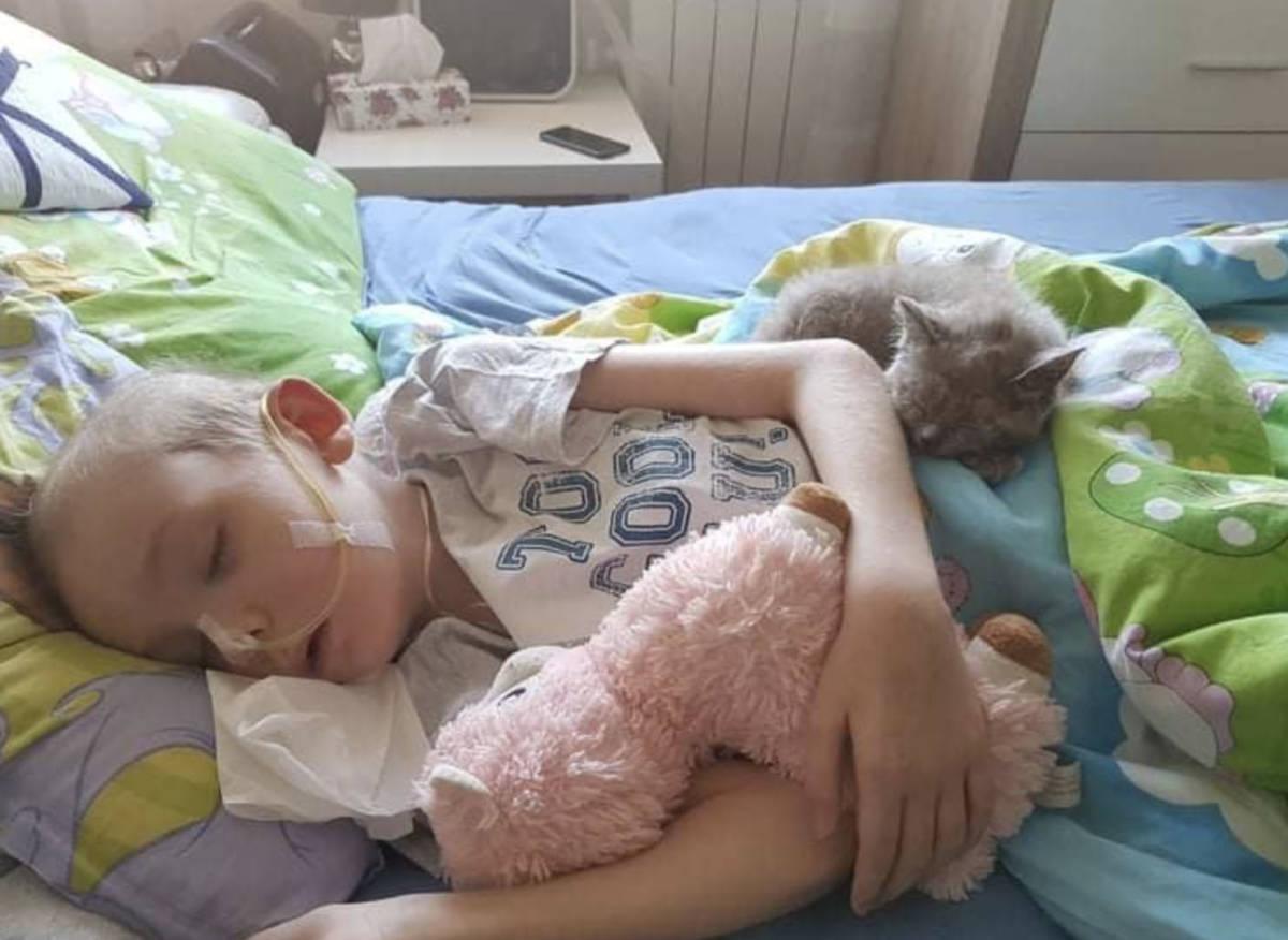 Skradziono rzeźbę kota z grobu Kacperka. Zwierzę było przy nim w ostatnich miesiącach życia