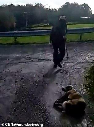 Dwukrotnie postrzelił własnego psa. Potem ciągnął go do domu, by tam dokończyć zabójstwo
