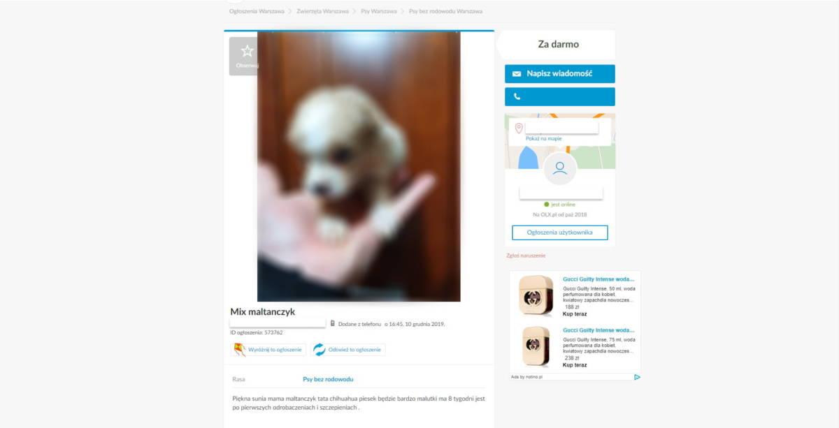 Psy wystawiane na OLX za darmo. Pod tymi ogłoszeniami kryje się masa kłamstw