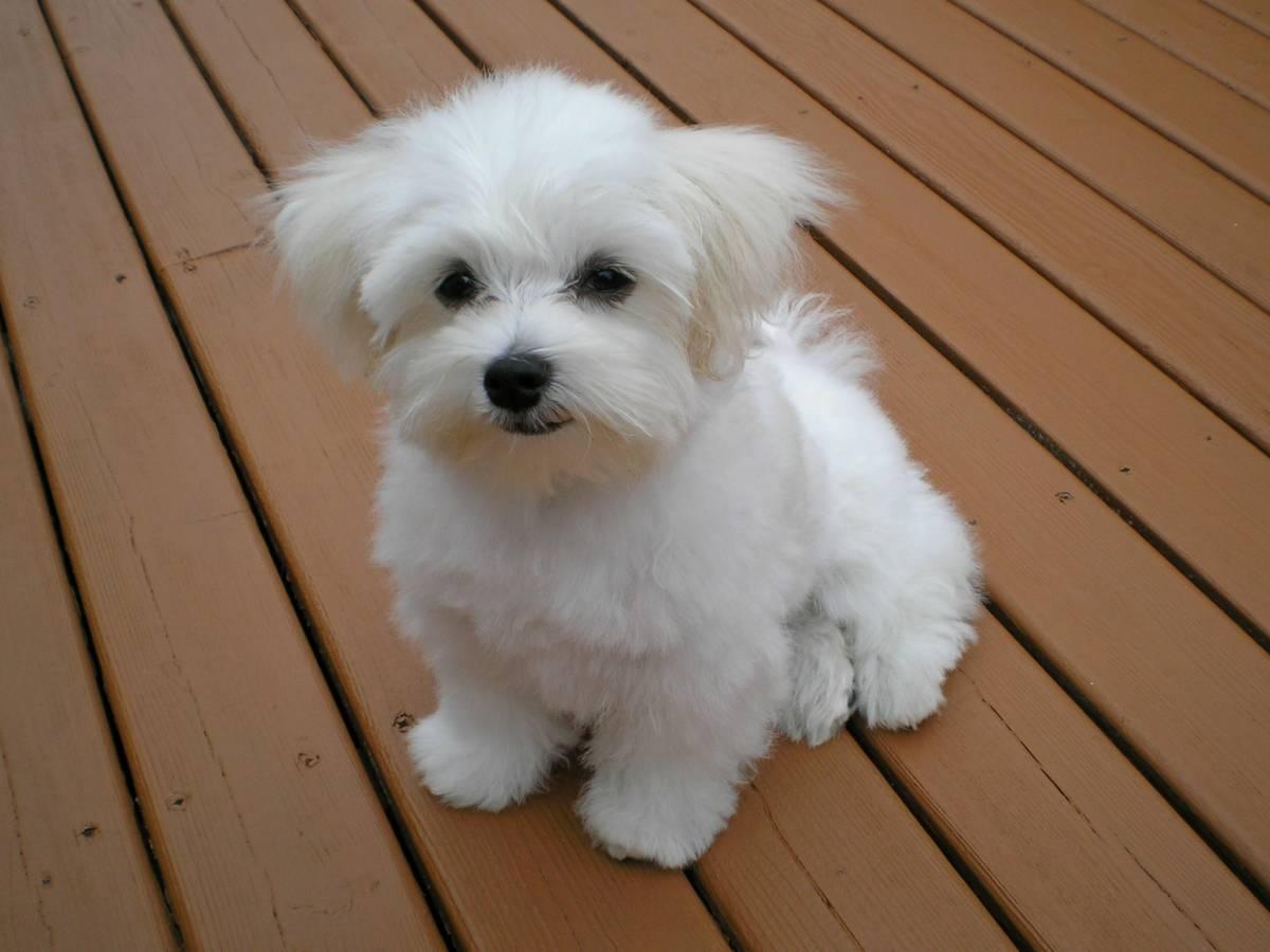Lista imion, które Polacy najczęściej wybierają dla swoich psów