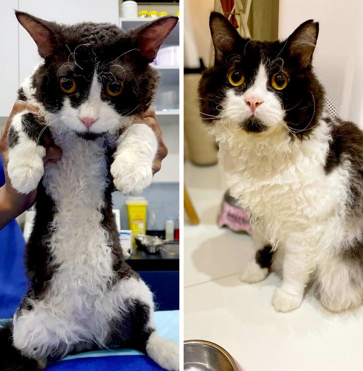 20 kotów, których wygląd sprawi, że ponownie będziesz chciał przyjrzeć się im z bliska