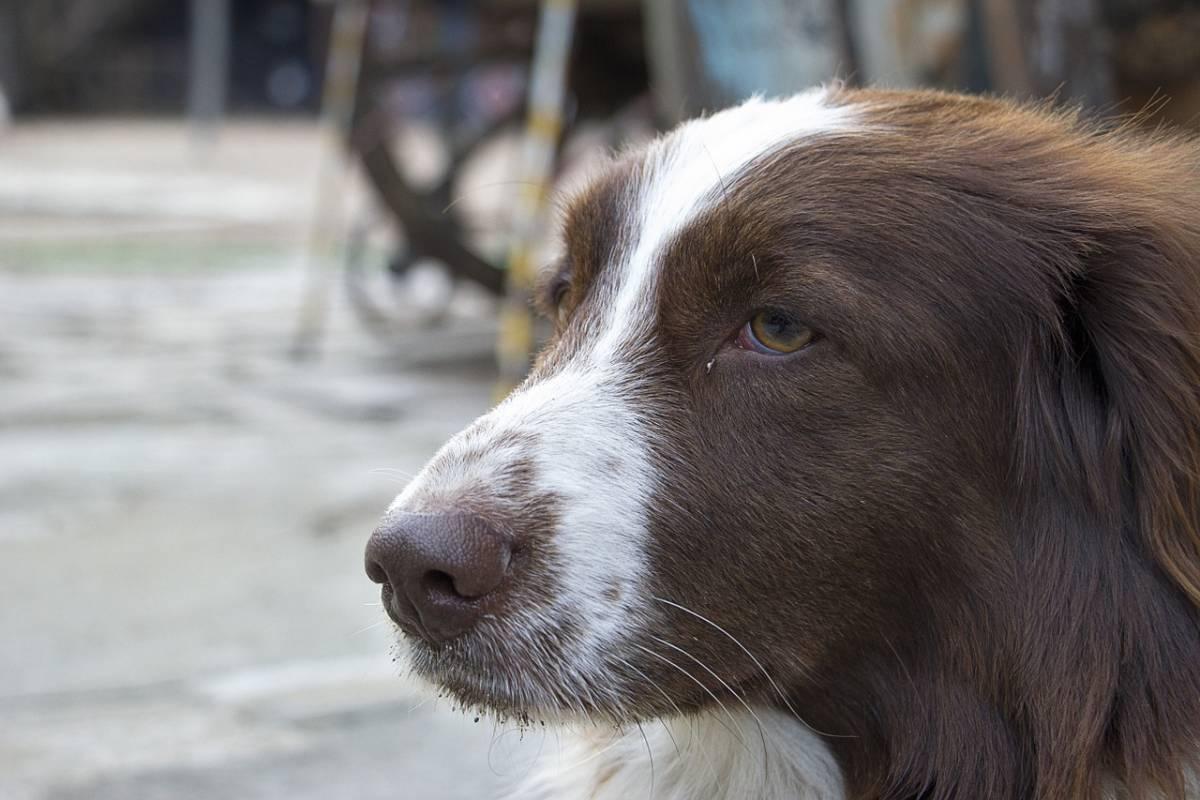 Cztery lata więzienia za okrutne znęcanie się nad zwierzakami. Pies i kot nie żyją