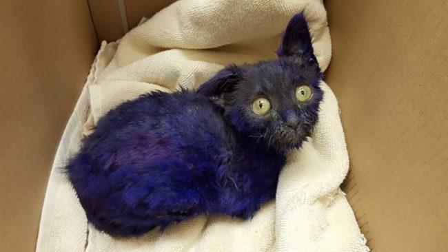 Był żywą przynętą dla psów. Fioletowe futro to najmniejsza ze szkód, którą mu wyrządzono