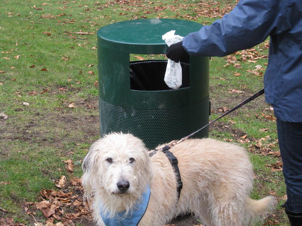 Notorycznie nie sprzątała odchodów swojego psa. Zajmie się nią sąd