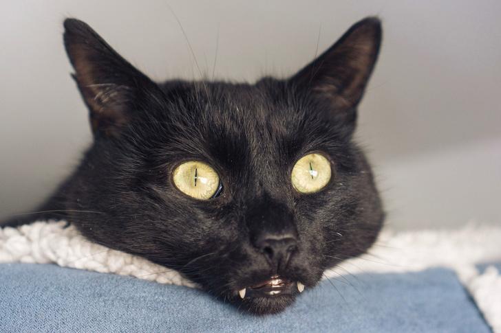 Ludzie zachwycają się małymi ząbkami kotów, publikując ich zabawne zdjęcia