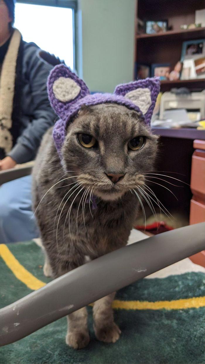 Bezdomny kot nie ma uszu. Ale gadżet na jego głowie sprawia, że znajduje dom w jeden dzień