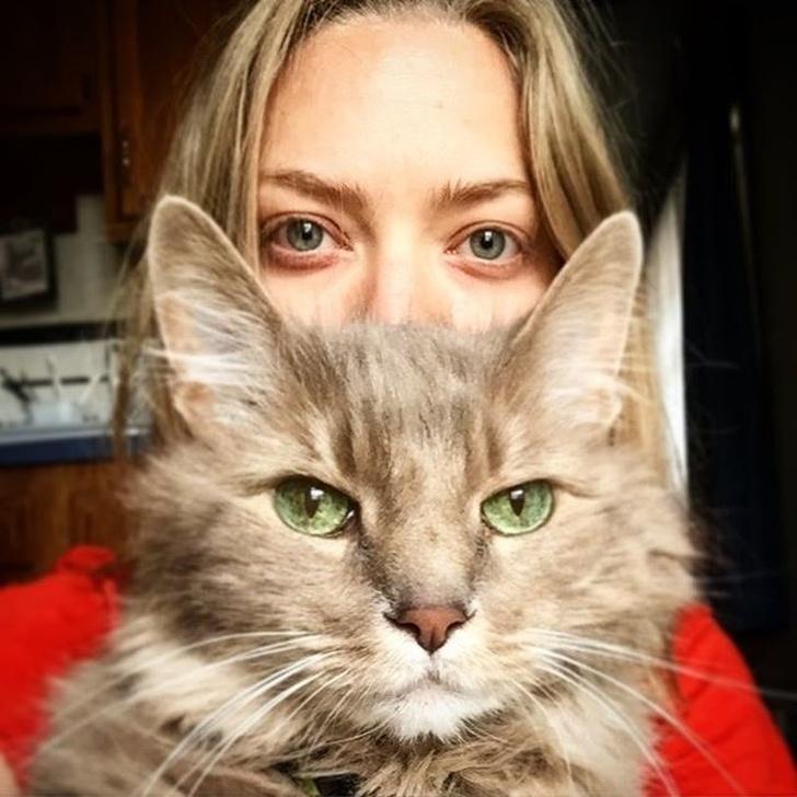 Dlaczego kot czeka na Ciebie pod samymi drzwiami, kiedy wracasz do domu?