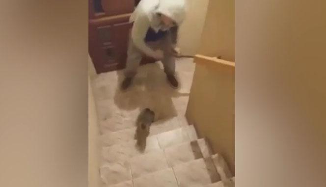 Przez minutę uderzał bezbronnego kota metalową pałką. Brutalne wideo wypłynęło do sieci