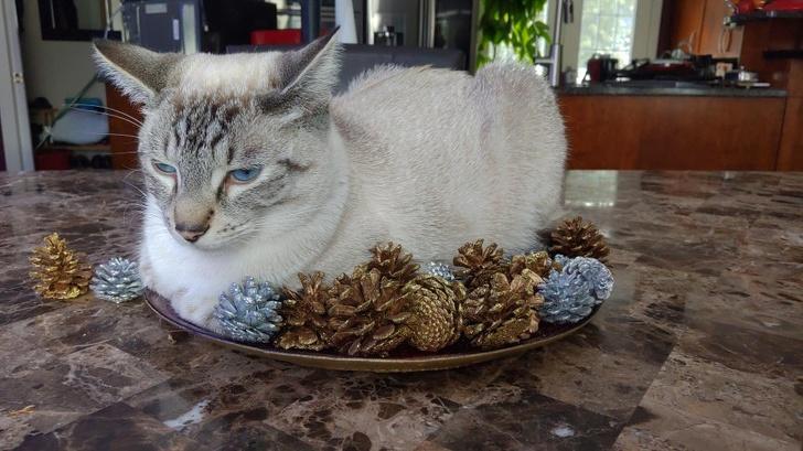 20 bezwstydnych kotów, które uważają się za panów i władców swojego domu