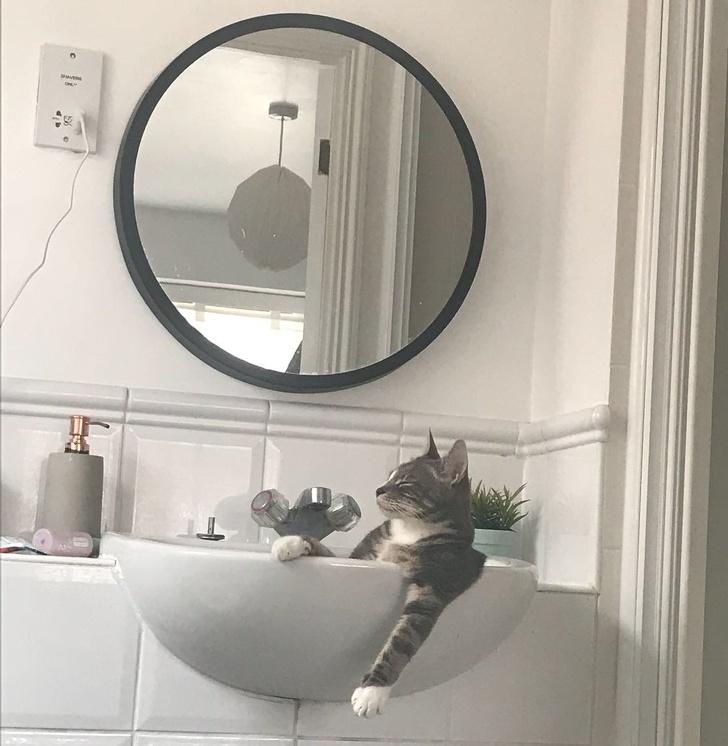 18 kotów przyłapanych w różnych dziwnych sytuacjach. Zasługują na miano pana domu