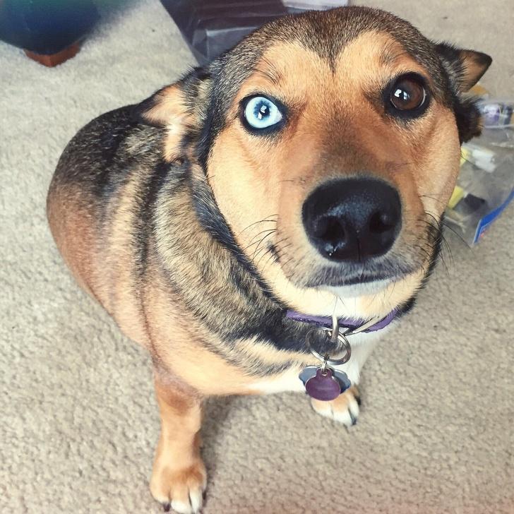21 psów, które powstały w wyniku krzyżówki dwóch odrębnych ras