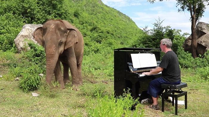 Muzyk gra dla niewidomego słonia, a reakcja zwierzęcia jest dla niego najlepszą zapłatą