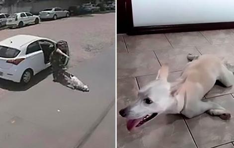 Zostawiła niepełnosprawnego psa na poboczu. Zwierzak usiłował biec za odjeżdżającym autem