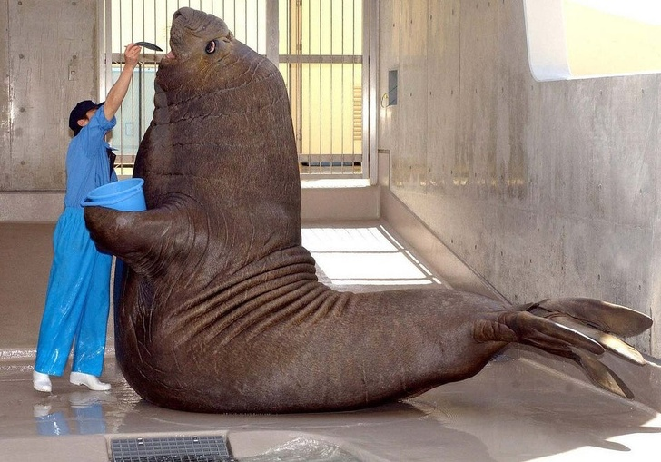 22 zwierzaki, których rozmiar wybiega daleko poza granice naszego rozumowania