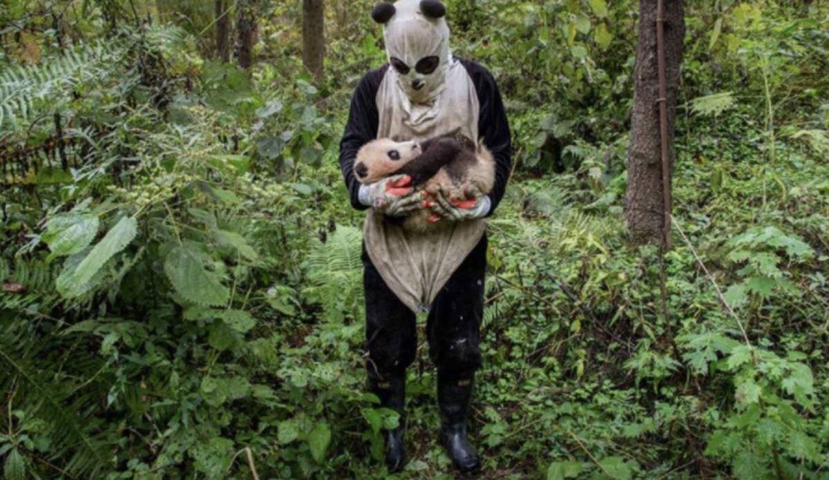 Praca idealna dla osób kochających pandy! Zakochasz się w niej od zaraz!