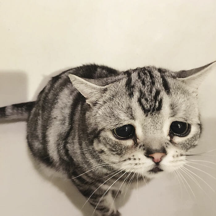 """Okrzyknięto ją """"najsmutniejszym kotem świata"""". Gdy spojrzysz w jej oczy, zrozumiesz"""