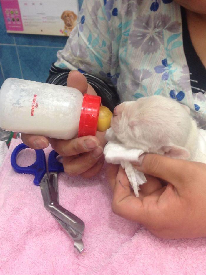Własna matka próbowała go zjeść zaraz po narodzinach. Zdążyła odgryźć mu przednią łapkę