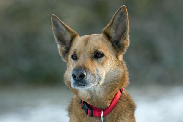 10 ras psów, które są najbardziej lojalne i wierne wobec swoich właścicieli