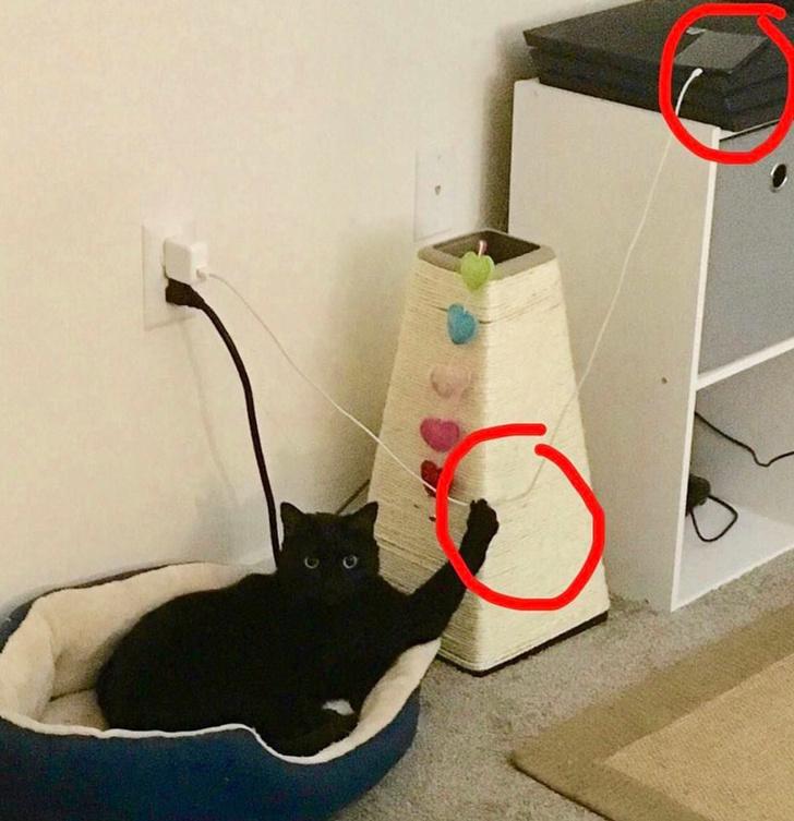 22 koty, które bycie wrednymi mają zapisane we krwi. Nic ich nie powstrzyma
