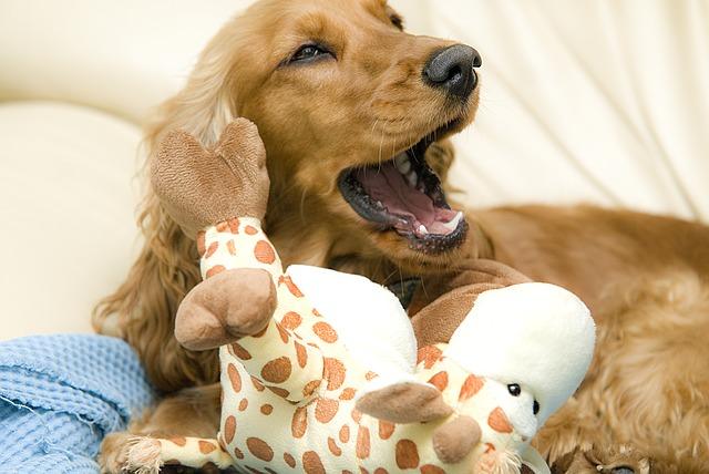 Naukowcy na podstawie 14 zachowań psów zdradzają, co zwierzaki usiłują nam powiedzieć