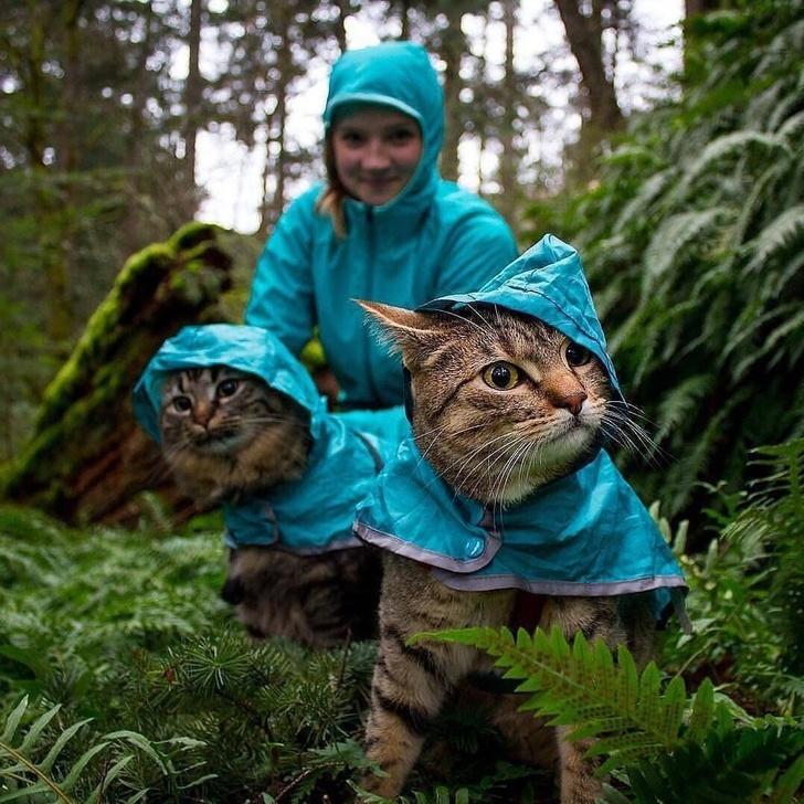 20 zdjęć, które udowadniają, że zwierzaki stają się dokładnie takie, jak ich ludzie