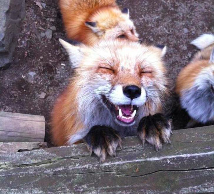 20 zwierzaków, które wyrażają emocje lepiej, niż co niektórzy aktorzy