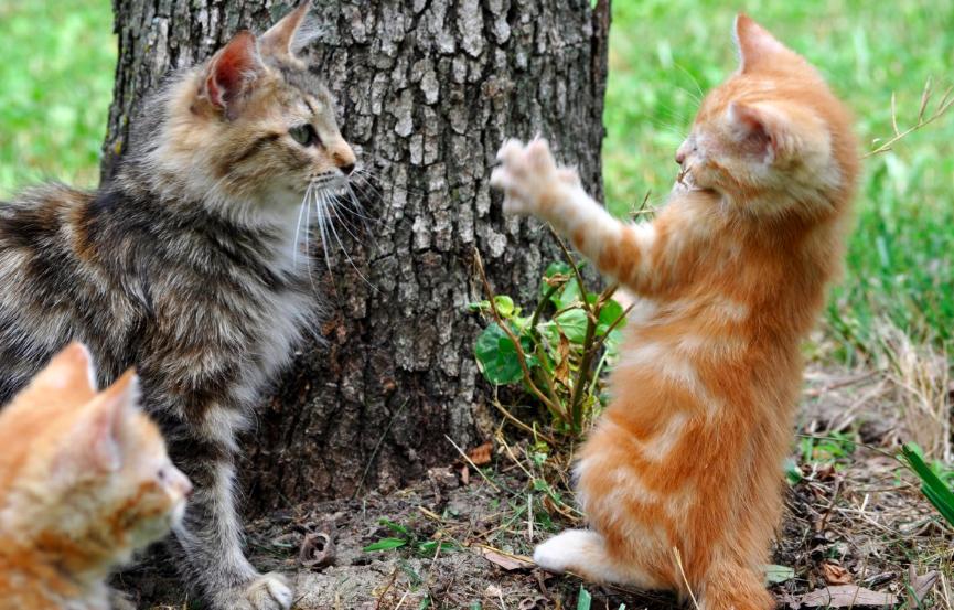 6 powodów, dla których nigdy w życiu nie powinieneś usuwać kotu pazurów