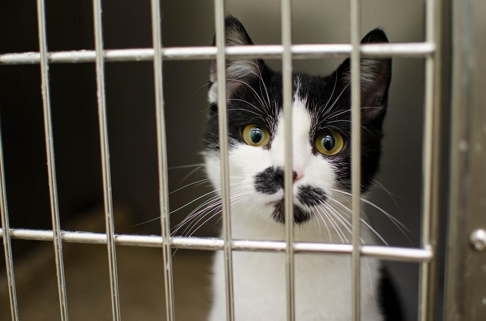 Zabrała kota ze schroniska, nim poddano go eutanazji. Odwdzięczył się jej w piękny sposób