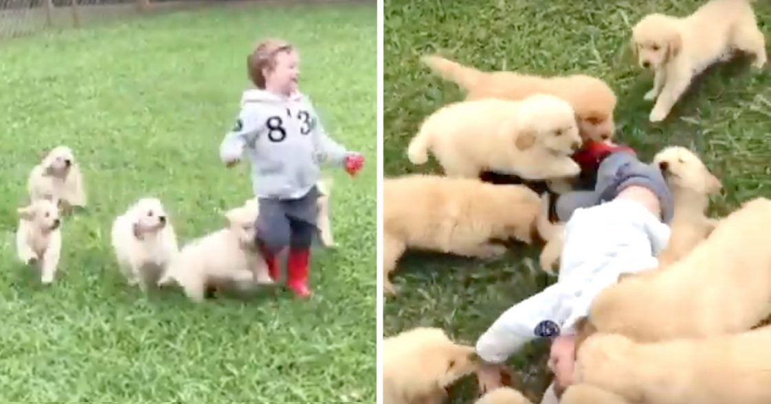 Chłopiec ucieka przed grupą szczeniaczków. Gdy przez przypadek upada, dzieje się magia!