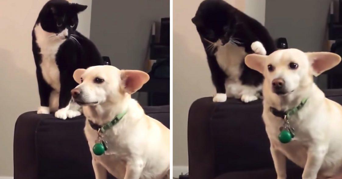 Kot kombinował, jak dokuczyć psu. Widząc, co wymyślił, właściciel pęka ze śmiechu