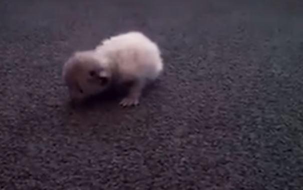 Zauważyła na ulicy małe stworzenie. Była pewna że to mysz, jednak bardzo się myliła