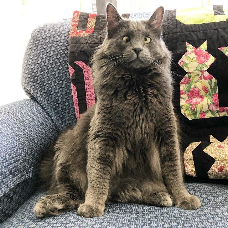 Adoptowała ze schroniska wyjątkowego a zarazem bardzo wyróżniającego się kociaka
