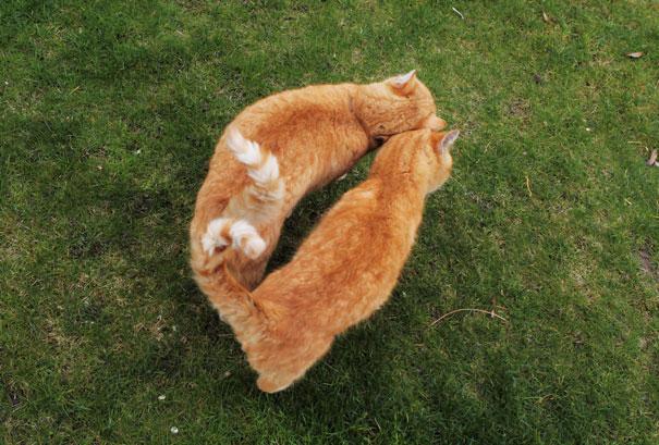 20 kotów gotowych na walentynki. Ich miłość widać gołym okiem