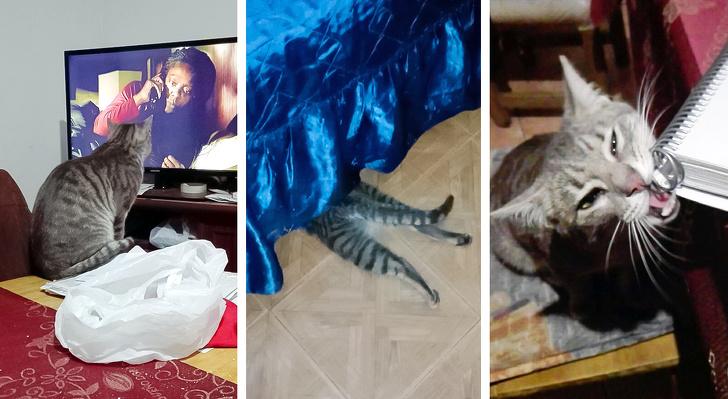 22 właścicieli kotów pokazało, co ich pupile tak naprawdę robią na co dzień