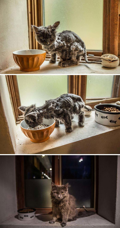 20 zwierzaków, które zmieniły się diametralnie w momencie, gdy znalazły dom
