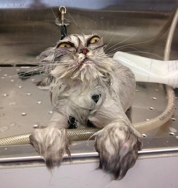 15 mokrych zwierzaków zaraz po kąpieli. Ich miny wyrażają więcej niż słowa!