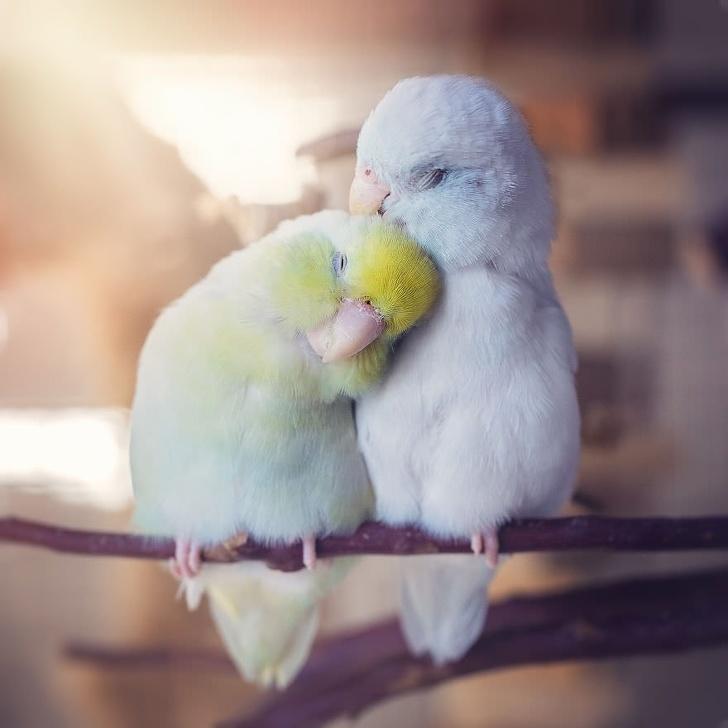 22 zwierzęce pary, które udowadniają, że będąc zwierzakiem też można się zakochać