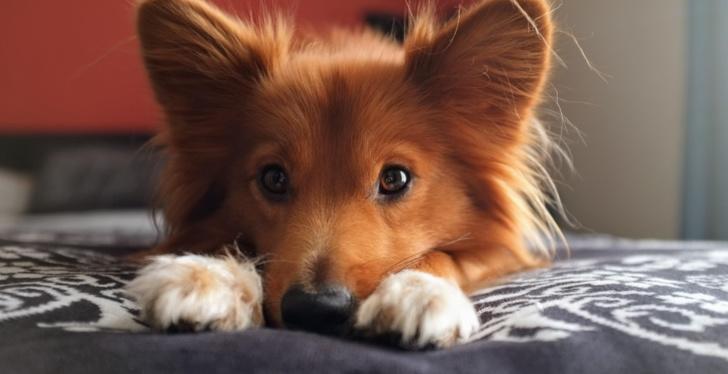Psy też potrafią kłamać. Jednak aby to zrobić, musządostać coś w zamian