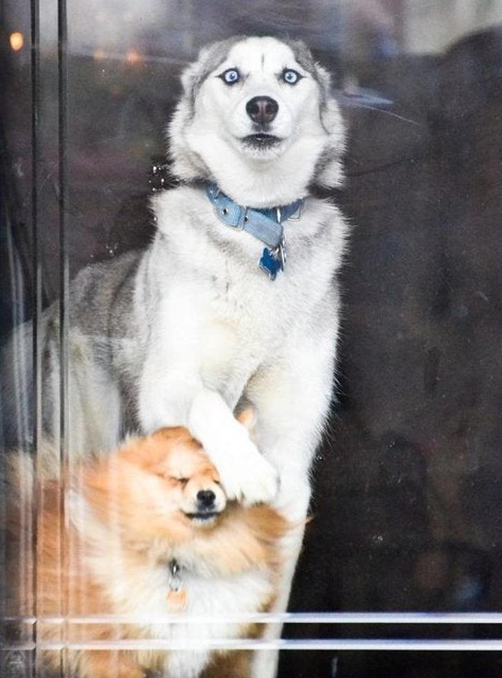 18 cudacznych psiaków, obok których trudno jest przejść obojętnie
