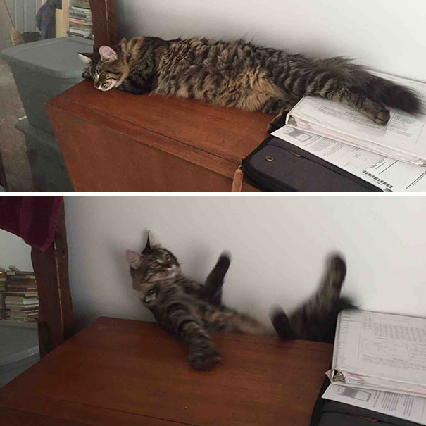 20 kotów przyłapanych na drzemce. Niech nie zdziwią Cię ich komiczne pozycje